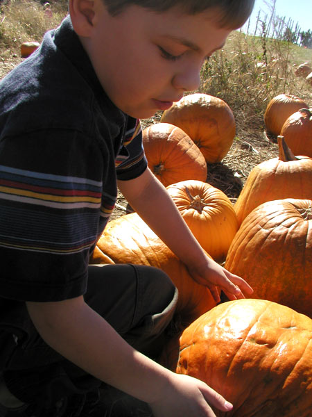 pumpkin selection is serious business