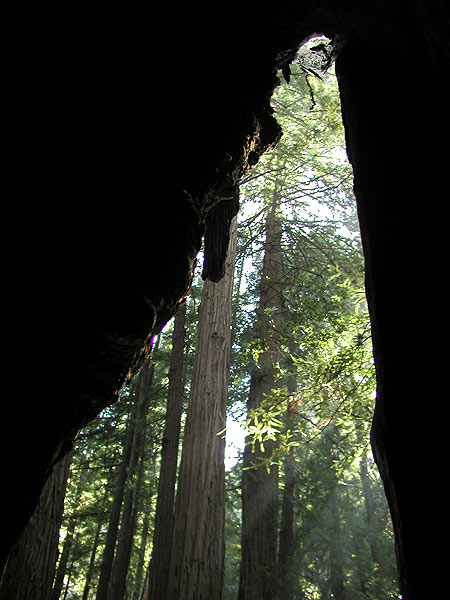 from inside an old tree