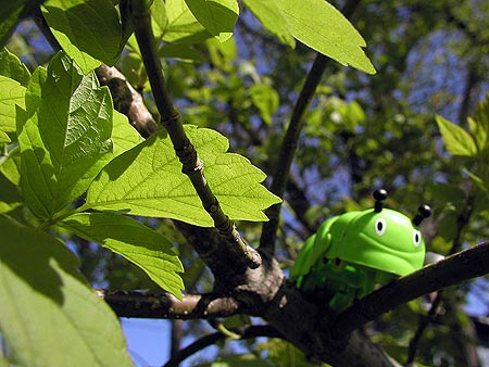 inchworm toy in tree